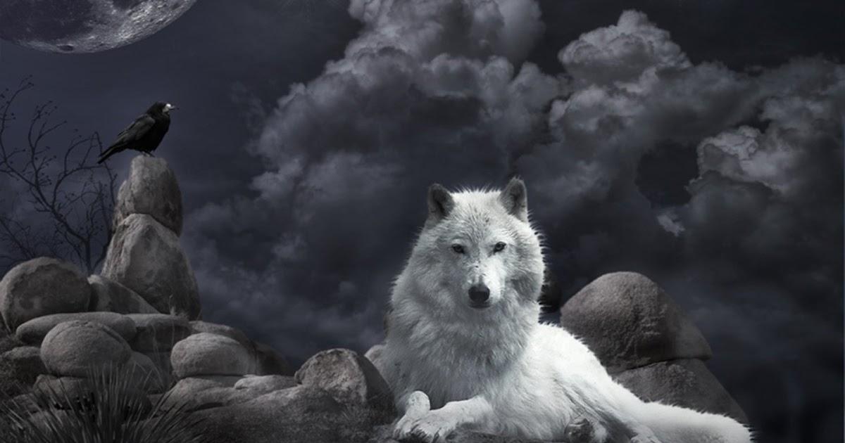 Imágenes y fondos HD: Lobo blanco